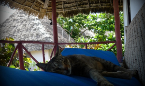 Mwezi Tabby Cat at Sazani Beach Resort Zanzibar Tanzania | The Girl Next Door is Black