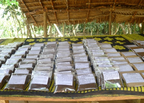 Spices for Sale Spice Farm Zanzibar Tanzania | The Girl Next Door is Black